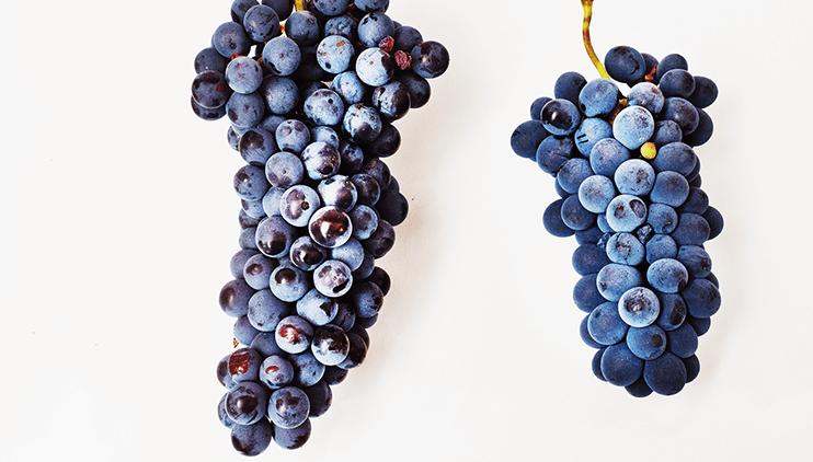 08:様々なブドウ品種