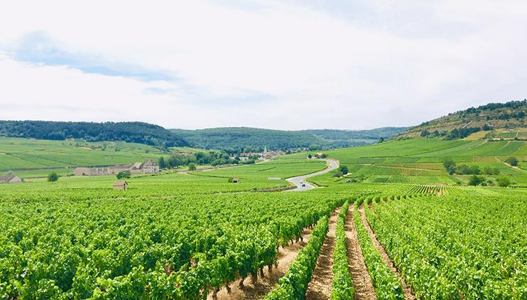 10:ワイン旅の終わりに