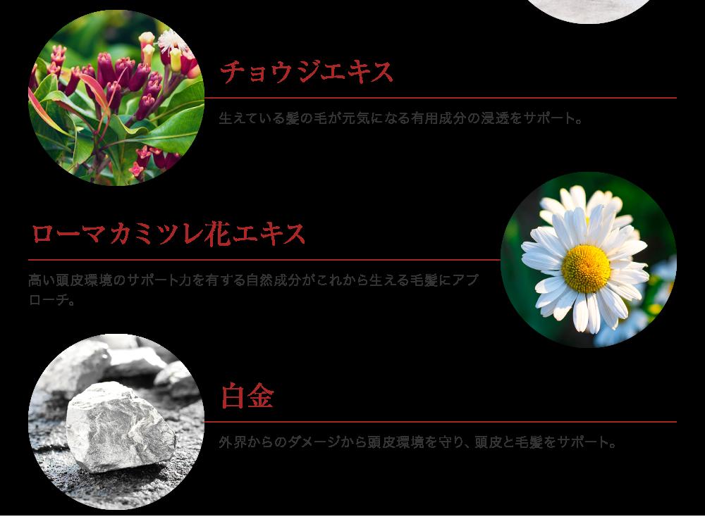 チョウジエキス、ローマカミツレ花エキス、白金