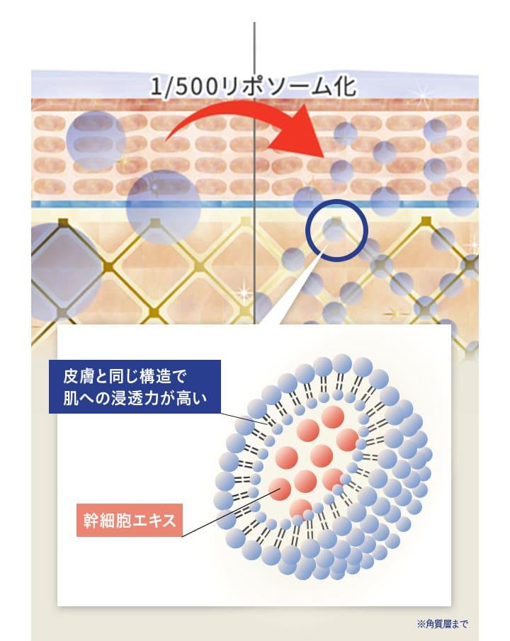1/500 カプセル(リポソーム)化