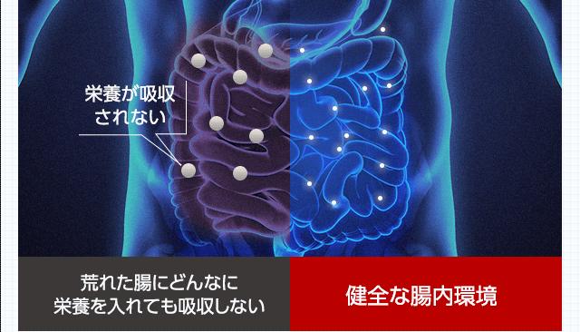 腸内のイメージ画像