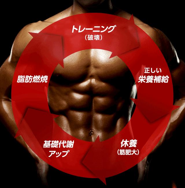 トレーニング(破壊)正しい栄養補給 休養(筋肥大)基礎代謝アップ 脂肪燃焼