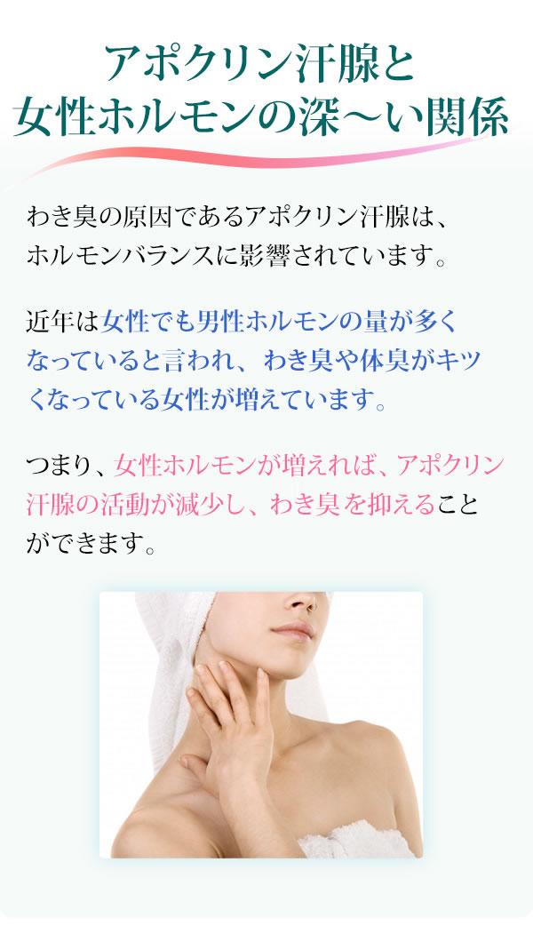 アポクリン汗腺と女性ホルモンの深い関係